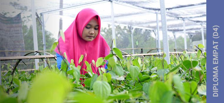 D4/S1 Pengembangan Produk Agroindustri