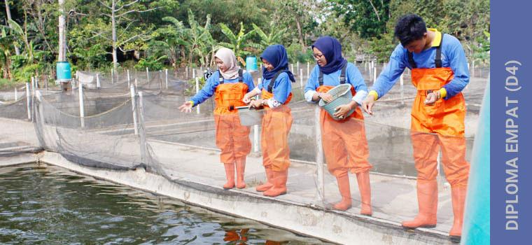 D4/S1 Teknologi Pembenihan Ikan